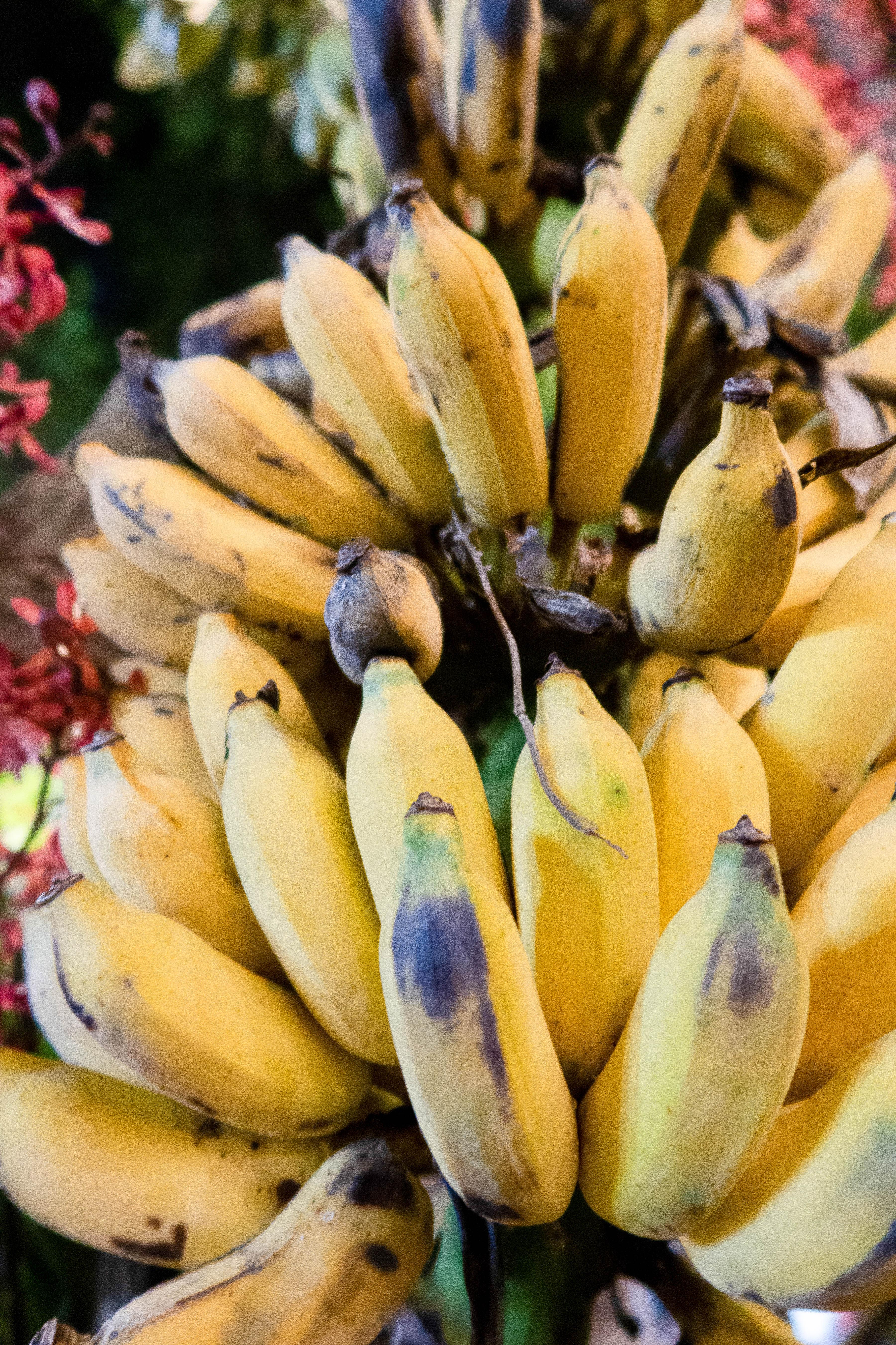 Bananes 2 - FRUITS & LÉGUMES