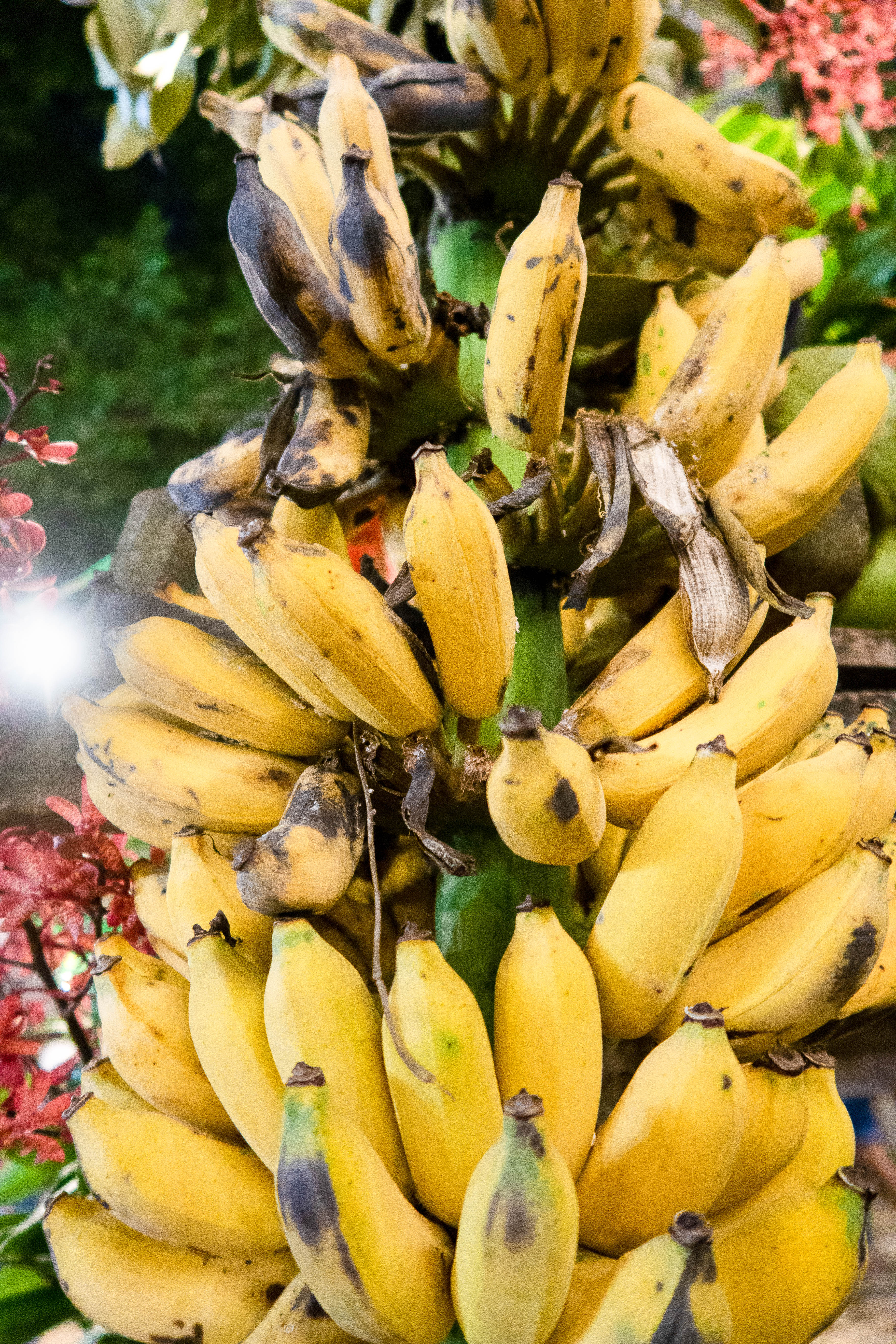 Bananes 3 - FRUITS & LÉGUMES