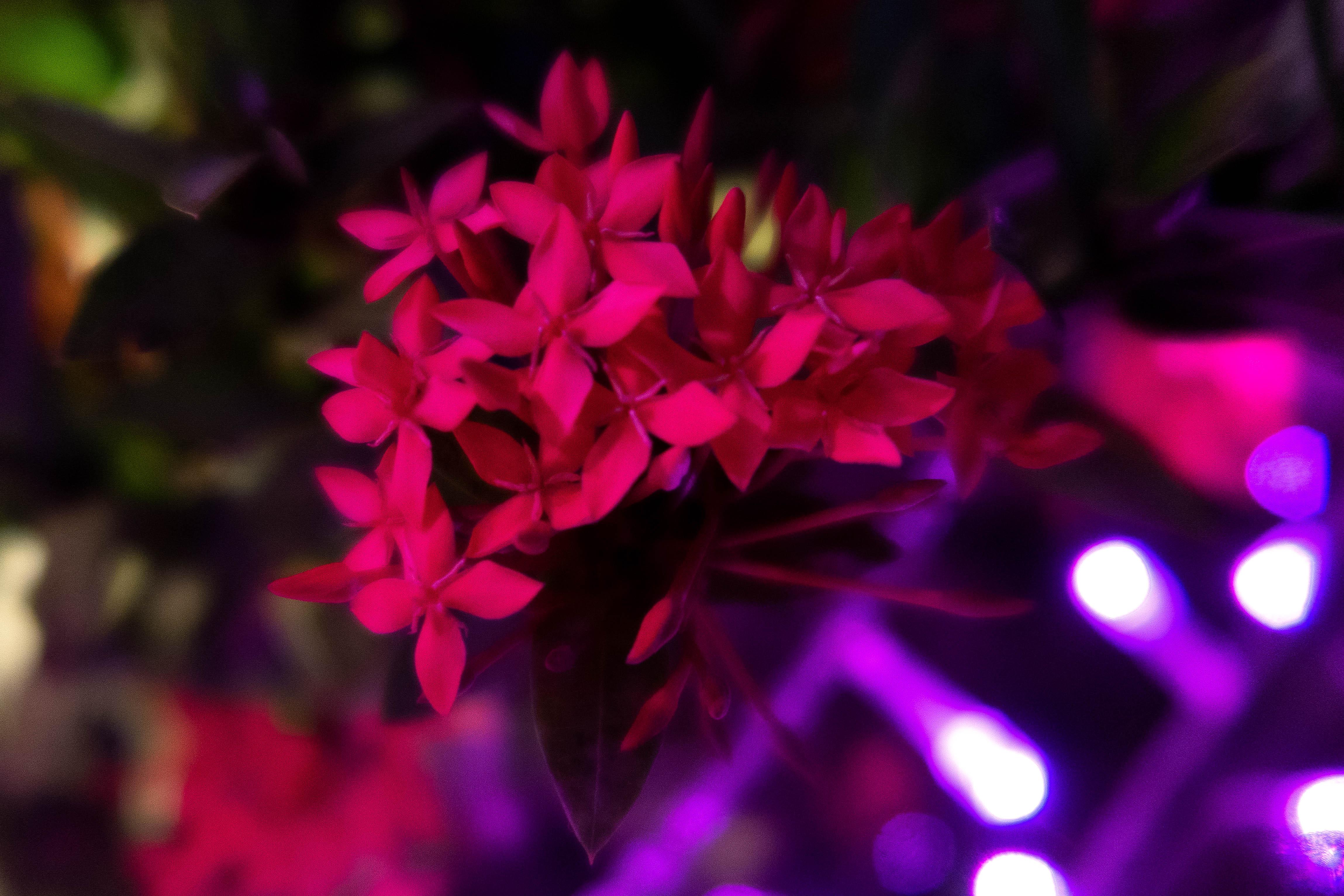 Fleurs + lumières 2