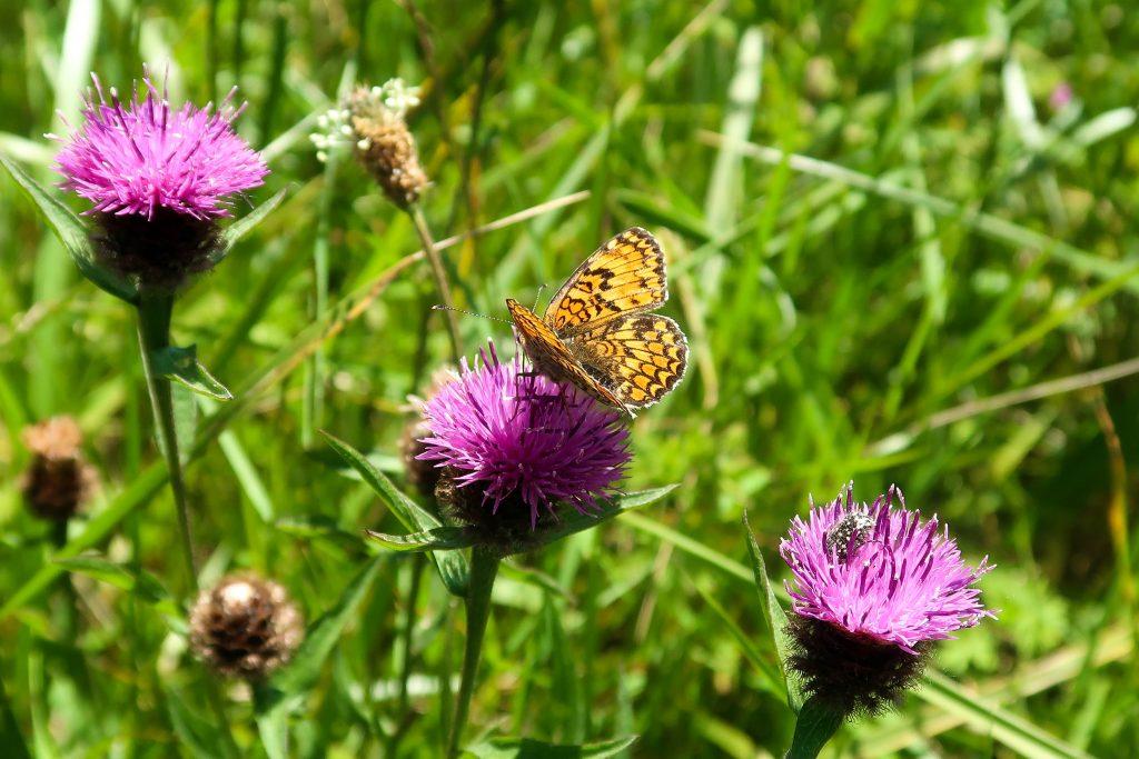 Papillon et fleurs violettes 1024x683 - ACCUEIL